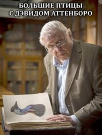 Большие птицы с Дэвидом Аттенборо