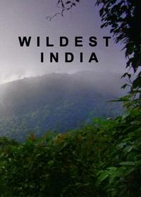 В дебрях Индии