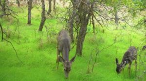Самые красивые места планеты Земля: Национальный парк Зайон. Осень