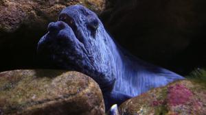 Тропический аквариум 2