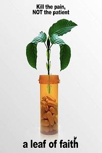 Растение, в которое я верю