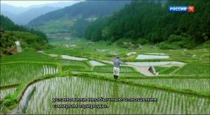 BBC. Живая природа Японии