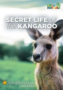 Тайная жизнь кенгуру / Secret life of the kangaroo