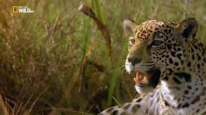Дикая природа Перу: арена боев – Анды / Wild Peru: Andes Battleground