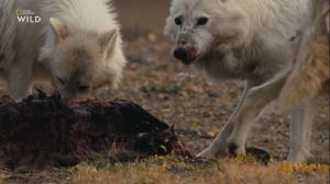Королевство белого волка / Kingdom of The White Wolf