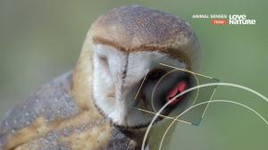 Чувства животных / Animal Senses