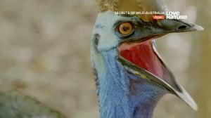 Тайны дикой природы Австралии / Secrets of Wild Australia