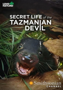 Тайная жизнь тасманийского дьявола