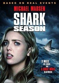Сезон акул