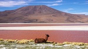 Боливия Альтиплано и Салар де Уюни