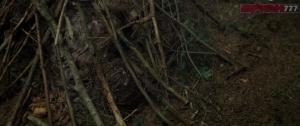 Тайна мертвого леса