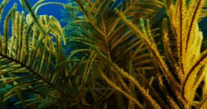 Мексиканский риф